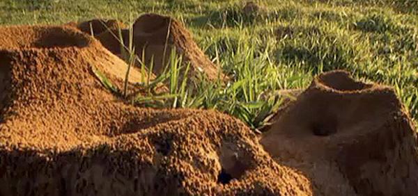 1-mistero-formiche-scienziati-riempiono-formicaio-con-cemento-all-opera