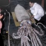 calamaro-gigante-foto-storiche-1