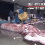 calamaro-gigante-foto-storiche-2