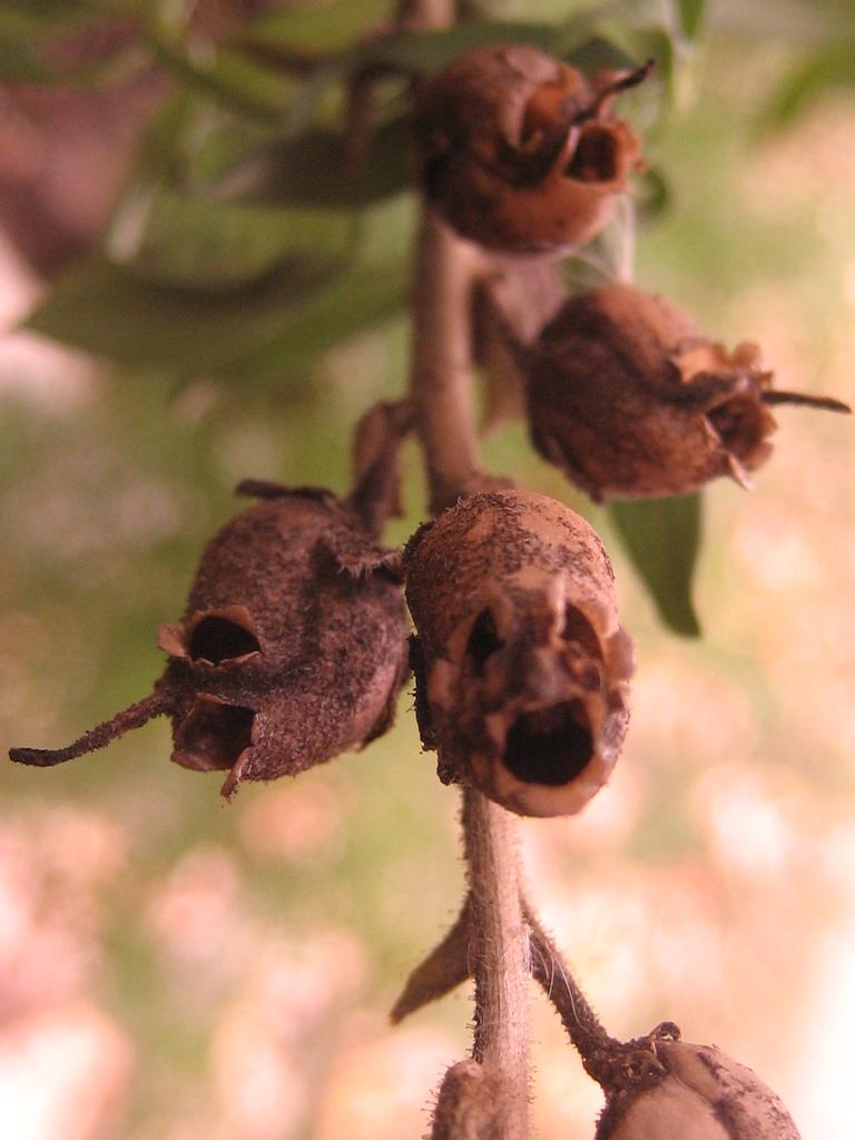 composizione-piante-snapdragon-teschi-viola