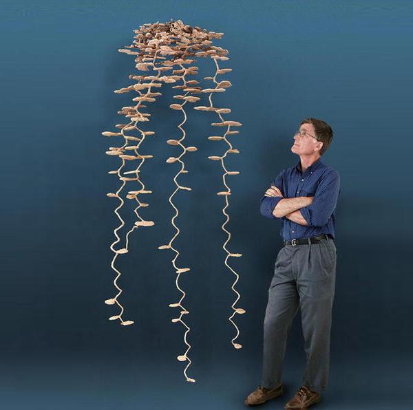 mistero-formiche-scienziati-riempiono-formicaio-ricostruzione-in-scala